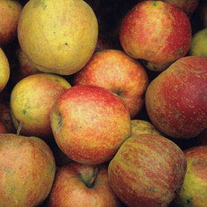 Apfel / Boskoop, Jonagold oder Rubinette